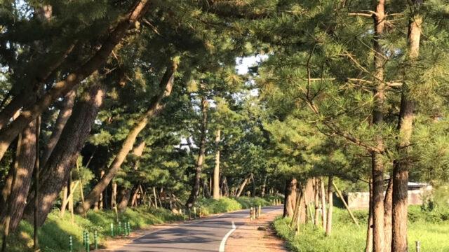 東海道 御油の松並木